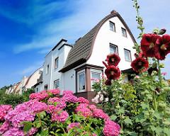 Blühende Hortensien und Stockrosen im Vorgarten in Hamburg Wilstorf - Wohnhäuser im geschwungener Dachform im Hintergrund.