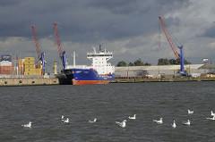 Möwen schwimmen auf dem Elbwasser des Ellerholzhafens auf Hamburg Steinwerder - Frachter und Kräne am Hafenkai.