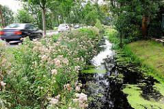 Neuländer Wettern - Entwässerungsgraben in Hamburg Gut Moor - Autoverkehr auf der Strasse; mit Wildkraut bewachsener Grabenrand.
