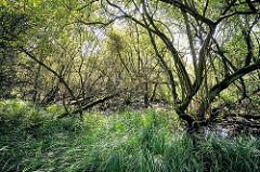 Feuchtgebiete im Stellmoorer Tunneltal - Gräser am Wasserrand, Bäume stehen im Tümpel.