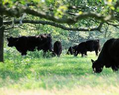 In Teilen des Naturschutzgebiets Höltingbaum grasen frei laufende Rinder - es wird empfohlen sich ihnen nur bis zu 25m zu nähern.