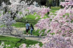 Ein Pärchen geht unter blühenden Kirschbäumen in Planten un Blomen spazieren - Bilder von Hamburg St. Pauli, Stadtteil im Bezirk Hamburg Mitte.