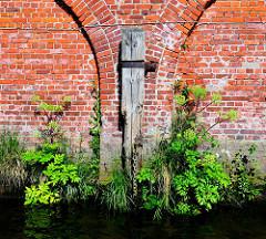 Ziegelmauer / Lagerhaus im Hamburger Hafen; Streichdalben mit üppig wachsender Pflanzen an der Wasserlinie.