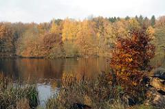Herbstbäume am Allhorndiek Teich- Hamburg Volksdorf.