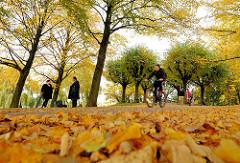 Herbst an der Alster in Hamburg St. Georg - der Alsterweg ist mit gelbem Laub bedeckt.