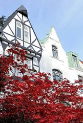 Hausgiebel Stadtvilla mit geschlossener Strassenfront - Japanischer Ahorn im Herbst; rote Ahornblätter - Herbstfarben.