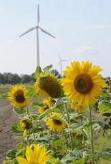 Windkraftanlage - Windräder am Sonnenblumenfeld.