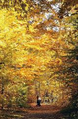 Alsterwanderweg bei Hamburg Poppenbüttel im Herbst - der Weg durch den herbstlichen Wald ist mit Laub bedeckt.