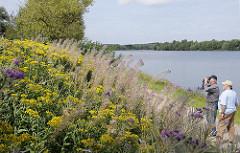 Bilder aus Hamburg Reitbrook - Naturschutzgebiet Reit - Naturbeobachtungen mit Fernglas an der Doveelbe.