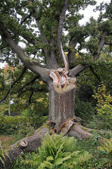 Sola Bona Park - Eichenbaum, abgebrochener Ast.