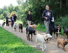 Hundesitting auf den Wiesen am Ufer der Doveelbe; eine grosse Gruppe Hunde mit ihren BetreuerInnen in Hamburg Allermöhe.