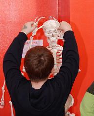 Hamburgs Kindermuseum am Osdorfer Born - ein Junge spielt mit den Armen eins Skeletts.