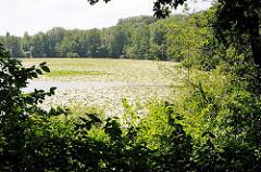 Blick durch Bäume und Sträucher auf den Harburger Aussenmühlenteich - Seerosen auf dem Wasser.