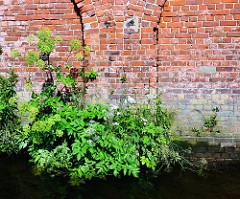 Ziegelmauer / Lagerhaus im Hamburger Hafen;  üppig wachsende Pflanzen / Gräser an der Wasserlinie des Gebäudes.