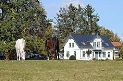 Pferdewiese mit grasenden Pferden.