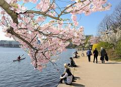 Blüte der Japanischen Kirsche in Hamburg