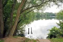 Dichte bewachsenes Ufer des Boberger Sees im Naturschutzgebiet Boberger Niederung in Hamburg Lohbrügge.