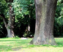 Eiche mit dickem Stamm - ein Parkbesucher liegt auf der Wiese und sonnt sich - Bilder aus Hamburg Othmarschen.