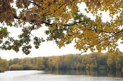 Hamburger Herbstbilder aus Bramfeld - herbstlich gefärbtes Laub am Grossen Bramfelder See