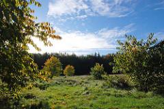 Wiese mit Herbstbäumen im Niendorfer Gehege - Blauer Himmel, Sonnenschein.