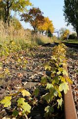 Industriegebiet Billbrook - überwachsene Eisenbahnschienen in der Liebigstrasse.