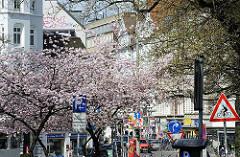 Japanische Kirschbäume am Strassenrand Hamburg Sternschanze - Blick in das Schulterblatt.