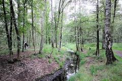 Birkenbestand am Raakmoorgraben - Naturschutzgebiet Raakmoor; Fotografien Hamburger Naherholungsgebiete.