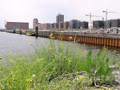 Blick auf den Grasbookhafen - blühendes Wildkraut am Ende des Hafenbeckens - Bauvorbereitungen am Kaiserkai. (2004)