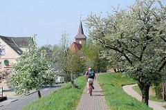 Fahrradfahrer auf dem Deichweg auf der Deichkrone zwischen blühenden Obstbäumen - Kirchturm der St. Pankratiuskirche von Hamburg Neuenfelde.