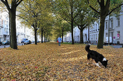 Herbstlaub auf der ehem. Ballspielbahn in der Palmaile - ein Hund spielt im Laub.
