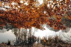 Herbstlaub in der Sonne am Allhorndiek Teich.