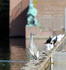 Ein Graureiher sitzt neben anderen Wasservögeln am Wasser des Stadtparksees - im Hintergrund eine Bronzefigur am Ufer des Stadtparksees in Hamburg Winterhude.