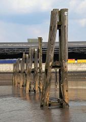 Niedrigwasser im Hamburger Hafen Holzdalben im Schlick des Moldauhafens,