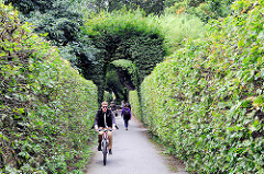 Mit hohen Buchenhecken  gesäumter Weg in Wehbers Park in Hamburg Eimsbüttel.