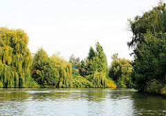 Bis dicht an das Wasser wachsen die Weiden und Bäume am Billekanal in Hamburg Rothenburgsort.