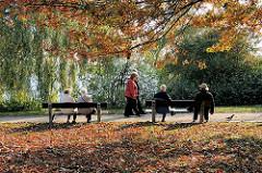 Herbst am Alsterufer - Laub liegt auf der Wiese - Menschen sitzen in der Herbstsonne auf den Bänken am Ufer der Alster.