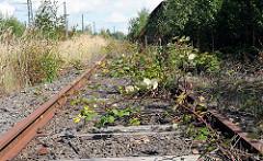 Mit Brombeersträuchern überwachsene Gleisanlage des Wandsbeker Güterbahnhofs - rostige Eisenbahnschienen - stillgelegte Eisenbahnlinie.