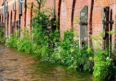 Ziegelmauer / Lagerhaus im Hamburger Hafen; Streichdalben aus Holz zum Schutz der Wand -  üppig wachsender Pflanzen / Wildkräuter an der Wasserlinie.