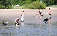 Hundestrand an der Elbe bei Hamburg Rissen - badenden Hunde im Sommer.