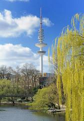 Weide im Frühlingsgrün an den Wallanlagen - Fernsehturm / Heinrich Hertz Turm, blauer Frühlingshimmel.