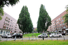 Blick über die Semperstrasse auf den Semperplatz - Pappeln stehen in zwei Reihen in der Grünanlage - Bilder aus der Hamburger Jarrestadt.