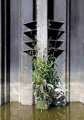 Eiserne Spundwand mit befestigtem Streichdalben - die Wasserlinie des Holzstamms ist mit Grünpflanzen bewachsen - Relikte / Überbleibsel vom alten Hamburger Hafen.