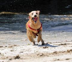 Spielender Hund auf einer aufgeschütteten Sandflächen im Haken beim Elbpark von Hamburg Rothenburgsort.