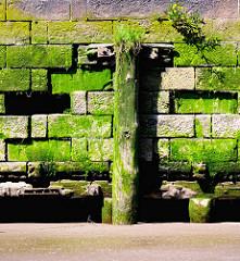 Alte mit Algen und Moos bewachsene Kaimauer  im Hamburger Hafen - abgebrochene Holzdalbe mit Gras bewachsen.