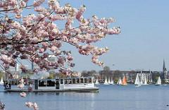 Hamburg Aussenalster Alsterdampfer +  Segelboote