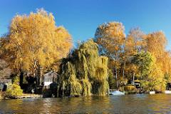 Herbstbäume am Bullenhuser Kanal in Hamburg Rothenburgsort; prächtige Herbstfarben in den Schrebergärten auf der Billerhuder Insel.