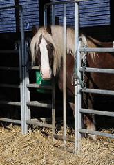 Pferd im Stall - strohbedeckter Boden - Bauernhof Burmester.