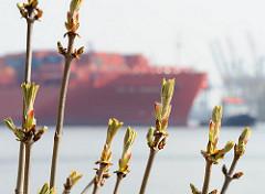 Fruehling an der Elbe Blattknospen + Containerschiff