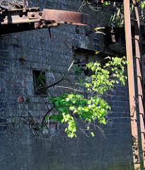 Alte Kaimauer - eine junge Birke wächst aus einer Mauerritze; verrotstete Eisentreppe und verbogene Halterung eines Streichdalbens - Relikte / Überbleibsel vom alten Hamburger Hafen.