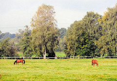 Pferdekoppel beim Niendorfer Gehege - Spazierweg entlang der Kollau im Hamburger Stadtteil Niendorf - Bilder aus den Bezirken.